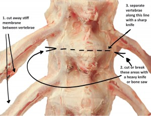 Breaking Down a Tuna Spine 2009: This diagram demonstrates how to disassemble a tuna spine to get at the delicious spinal jelly.