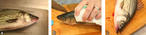 """Fish 1 """"Stressed"""": a) remove from water for 30 minutes; b) kill by putting knife in brain; c) do not bleed. Wait 30 minutes then remove head and gut"""