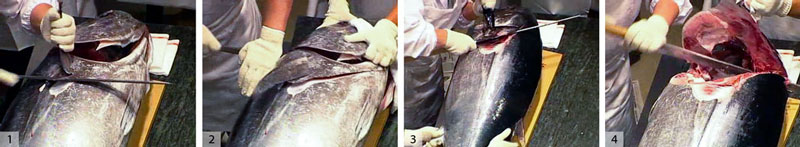 1) and 2) Grab pectoral fin and cut in a vee to center of the head. 3) and 4) Flip the fish over and repeat.