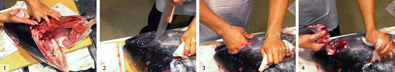 1) Chef Kobayashi shows where the head meat came from. 2) Cut around the other eyeball. 3) Free it with your hand. 4) Rip out the eye. The eyes can be eaten raw or wrapped in foil and cooked.